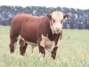 bensimpson_livestock_5715_0