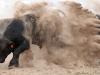 dancing-with-bulls-32