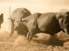 dancing-with-bulls-39