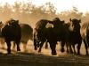 dancing-with-bulls-49