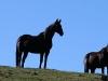 Horse #6