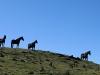 Horse #7