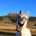 OSO-Arabians